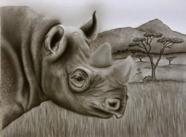 Rhinocéros N&B