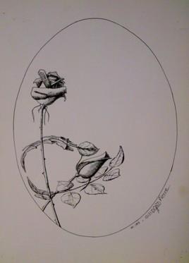 Rose materne