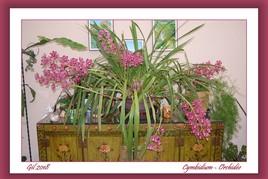 Orchidée en fleurs depuis 11/2017...