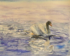 cygne solitaire