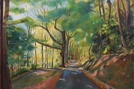 Chemin près de MONTSALVY (Cantal)