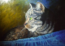 Chat à la couverture bleue (46x38)
