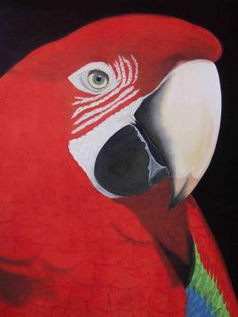 le perroquet rouge