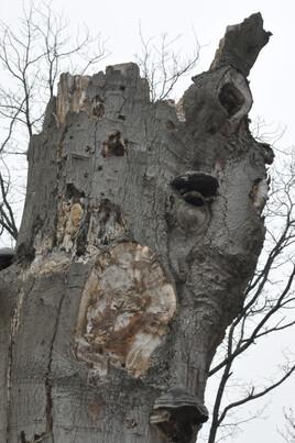 """""""arbre de la connaissance"""""""