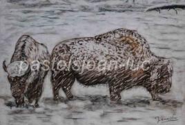 Bisons dans le blizzard