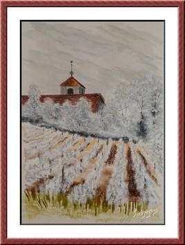 Givre sur le vignoble