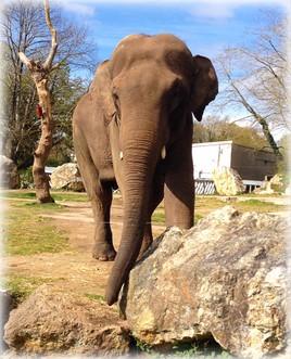 Zoo de pont scorff Lorient