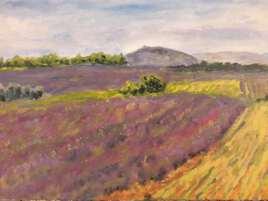 paysage, champs de lavande
