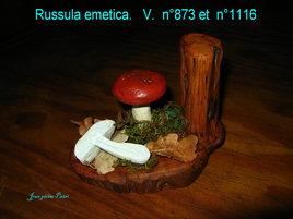 Russula emetia