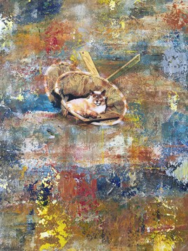 Les chats des cabanes de pêcheurs