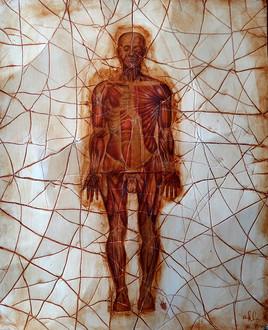 composition anatomique