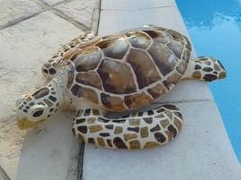Mira-tortue
