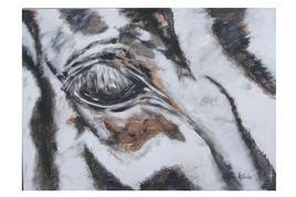 Oeil de zèbre