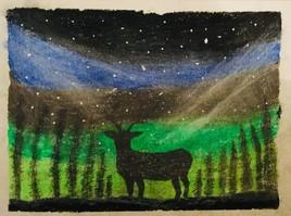 Deer Vs Night
