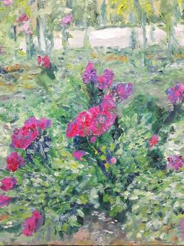 buisson de roses dans le parc