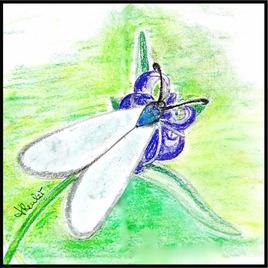 Turquoise de la globulaire (Jordanita globulariae) / Drawing A Jordanita globulariae