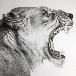 Le cri du guépard