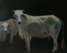 Venezuelian Cows