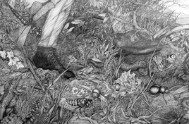 Bestiaire du petit monde qui nous entoure, planche 9 - 120 cm x 80 cm - Stylo bille.