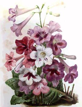Bouquet de fleurs sauvages