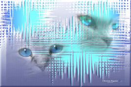 Duo de portrait de chats