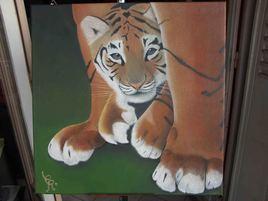 le bb tigre