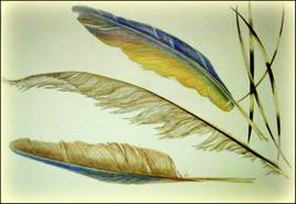 Piques et plumes.
