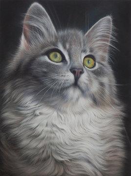 Malcolm, le Chat tigré