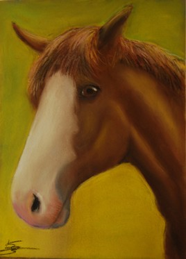 Un cheval nommé Zorro