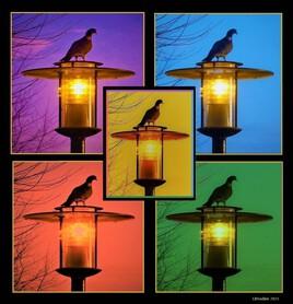 un pigeon mis en lumière à la manière d'Andy Warhol :)
