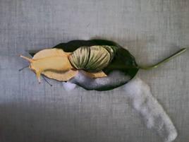 Bubouille mon escargot de compagnie