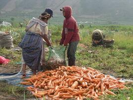 condition féminine et monde rural 3 :  le Guatemala