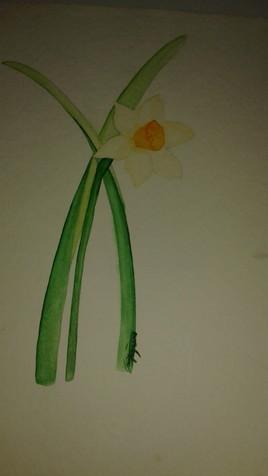 Narcisse.
