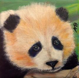 Panda tristounet