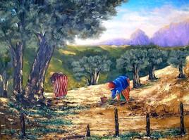 Saison des olives 2