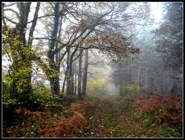 Forêt à Saint-Maurice-Montcouronne (photo perso)