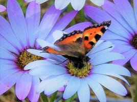 le papillon et la fleur..