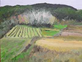 paysage, bosquet, champs, vigne