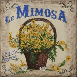 le mimosa de Fernande