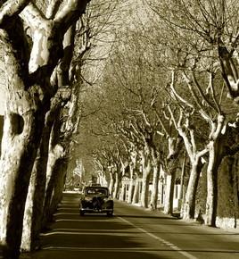 dream car,dream road