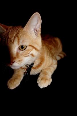 mi-ombre...mi-chaton...