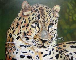 Le leopard du fleuve Amour