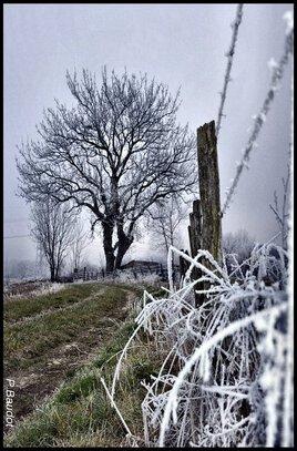 Vers le vieux chêne