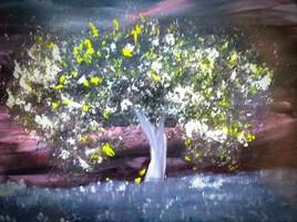 L'arbre de Lucilia