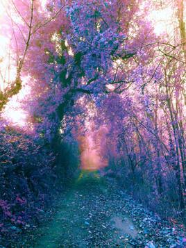 La forêt et ses mystères ...