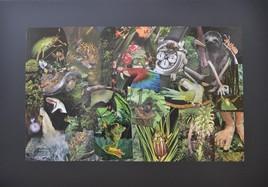 Compte à rebours pour sauver la forêt amazonienne