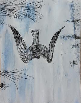 Faucon Pèlerin sur les marais du Marquenterre