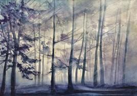 Forêt bleue en hiver