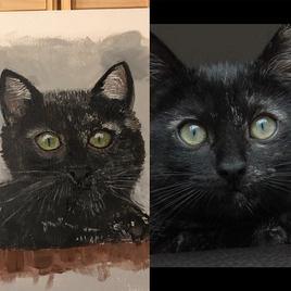 Salem chaton