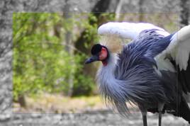 Flight of birds   -  IMG_6947-